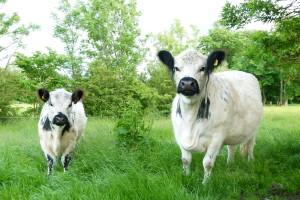Werona und Loreley (7)